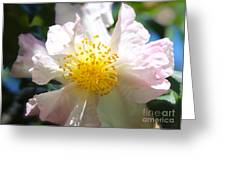 Winter Camellia Greeting Card