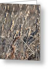 Winter Cattail Abstract Greeting Card