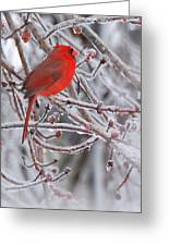 Winter Chill Greeting Card
