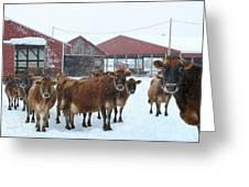 Winter Dairyland Greeting Card
