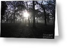 Winter Dawn Light Through Trees Greeting Card