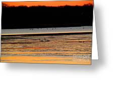 Winter Dawn Swans Greeting Card