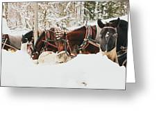 Horses Eating In Snow Greeting Card