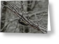 Winter Downy Greeting Card