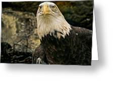 Winter Eagle Greeting Card