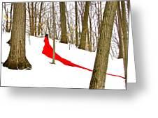 Winter Empress Greeting Card