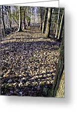 Winter Fall On The Trail Greeting Card
