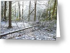 Winter Fallen Tree Greeting Card by Thomas R Fletcher