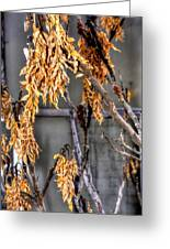 Winter Foliage Old House 13126 Greeting Card