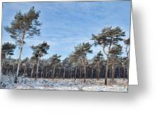 Winter Forest Covered With Snow Greeting Card by Dirk Ercken