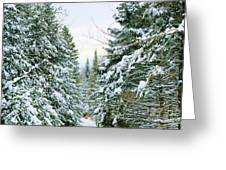 Winter Forest Landscape Greeting Card