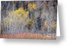 Winter Forest Landscape With Bare Trees Greeting Card