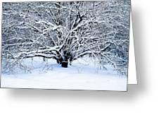 Winter Fresh Greeting Card