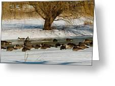 Winter Geese - 01 Greeting Card