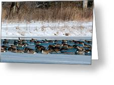 Winter Geese - 02 Greeting Card