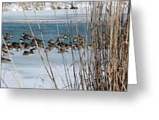 Winter Geese - 04 Greeting Card
