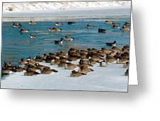 Winter Geese - 05 Greeting Card