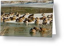 Winter Geese - 06 Greeting Card
