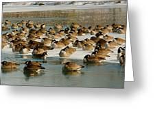 Winter Geese - 07 Greeting Card