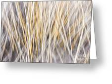 Winter Grass Abstract Greeting Card
