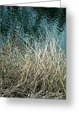 Winter Grasses Greeting Card