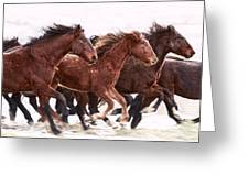 Winter Hardened Wild Horses Greeting Card