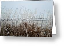 Winter Harvest Greeting Card