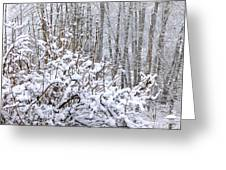 Winter Haven 2 Greeting Card