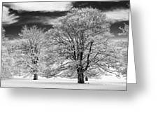 Winter Horse Chestnut Trees Monochrome Greeting Card