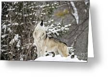 Winter Howl Greeting Card
