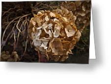 Winter Hydrangea Greeting Card