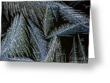 Winter In Canada- Winter Frost Greeting Card