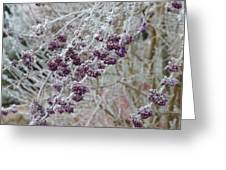 Winter In Lila Greeting Card