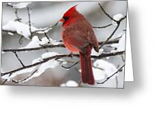Winter In Red Greeting Card