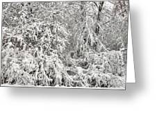 Winter In The Heartland 12 Greeting Card