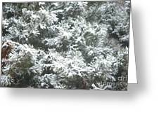 Winter In The Heartland 2 Greeting Card