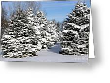 Winter In The Pines Greeting Card