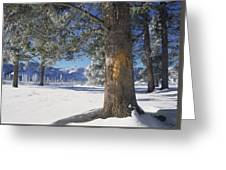 Winter In Yellowstone National Park Greeting Card