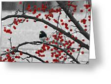 Winter Junco Greeting Card