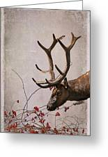 Winter King Greeting Card by Julie Magers Soulen