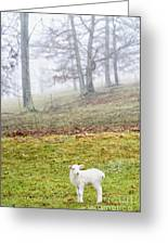Winter Lamb Foggy Day Greeting Card
