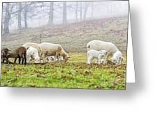 Winter Lambs Foggy Day Greeting Card