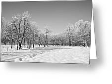 Winter Landscape In Bw Greeting Card