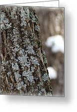 Winter Lichen Greeting Card by Elizabeth Sullivan