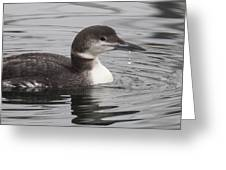 Winter Loon Greeting Card