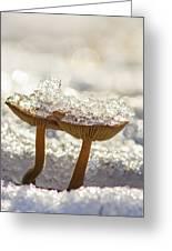 Winter Mushrooms Greeting Card