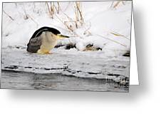 Winter Night Heron Greeting Card