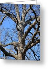 Winter Oak 2014 Greeting Card