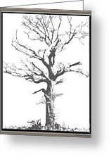 Winter Oak Art Greeting Card