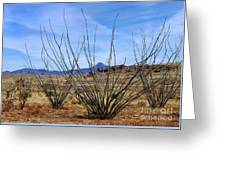 Winter Ocotillo Garden Greeting Card